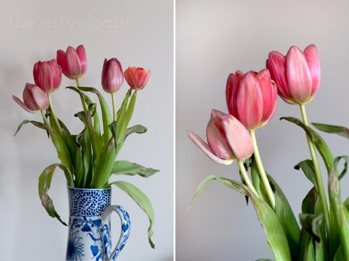 tulip-study, the artyologist