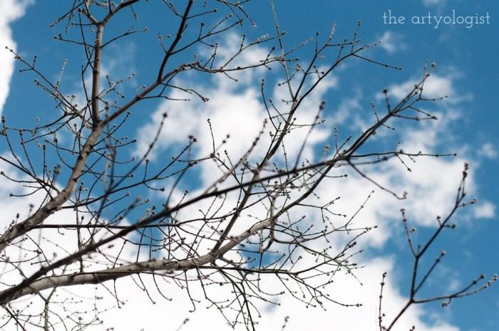 blue skies, life lately