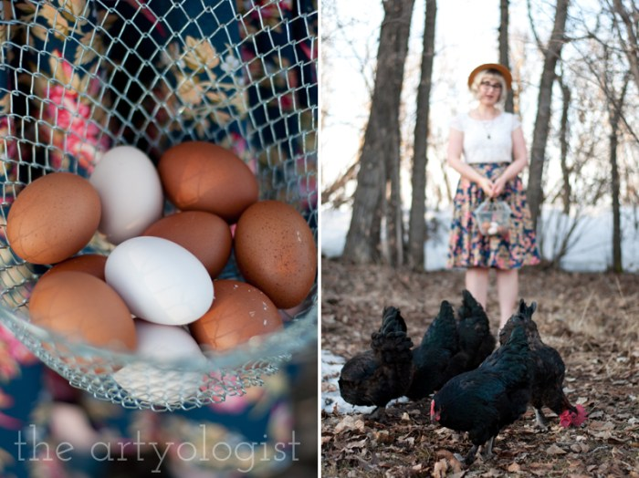 speckled eggs and black copper marans chickens