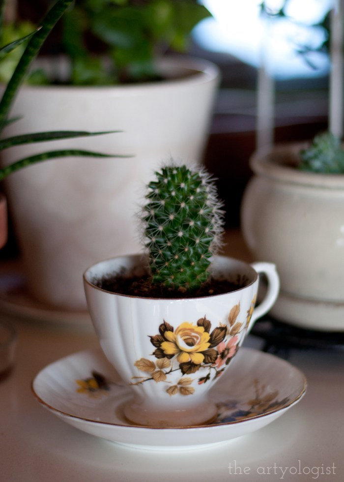 a cactus planted in a vintage teacup with yellow and brown flowers on it