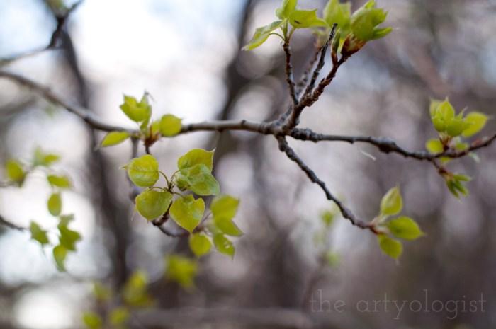 tiny aspen leaves