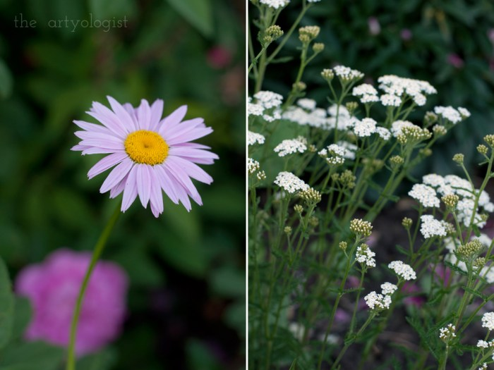 pink daisy and white yarrow