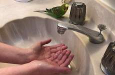 Bird In The Sink Is Wonderful Unintentional ASMR