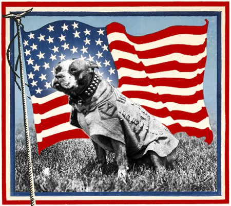 The Real W.W. I Sgt. Stubby