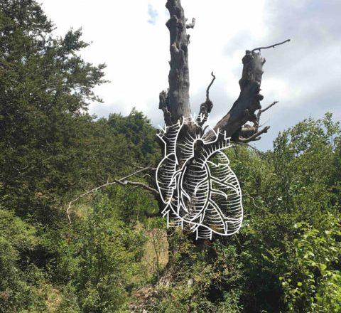 ARTEPARCO, progetto di arte sostenibile nei boschi del Parco Nazionale d'Abruzzo