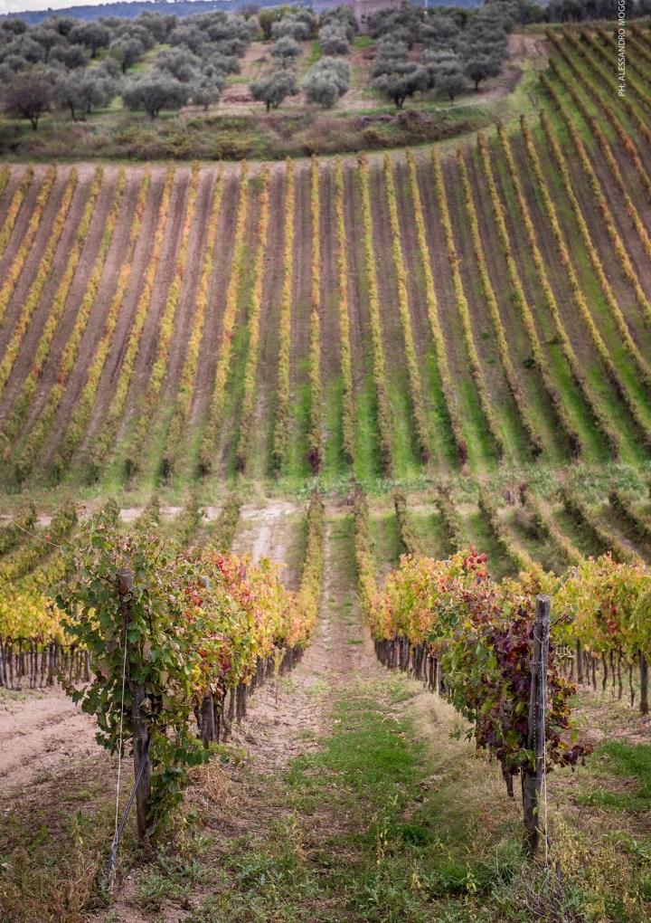 Degustando ottimi vini in giro per Milano: è in corso la Wine Week