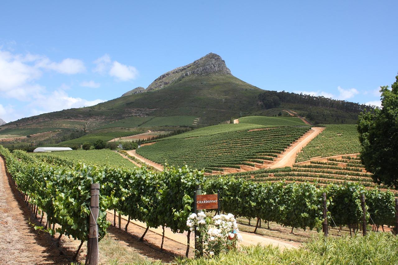 South Africa Vineyard