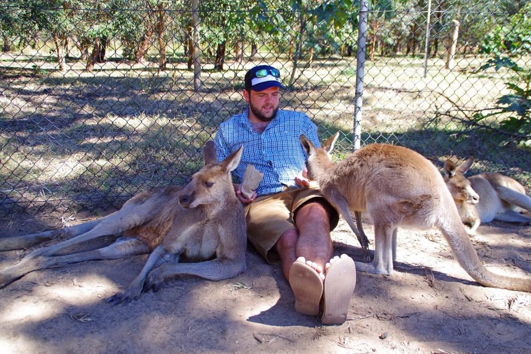 Petting Kangaroo's and Cuddling Koalas at Lone Pine Koala Sanctuary