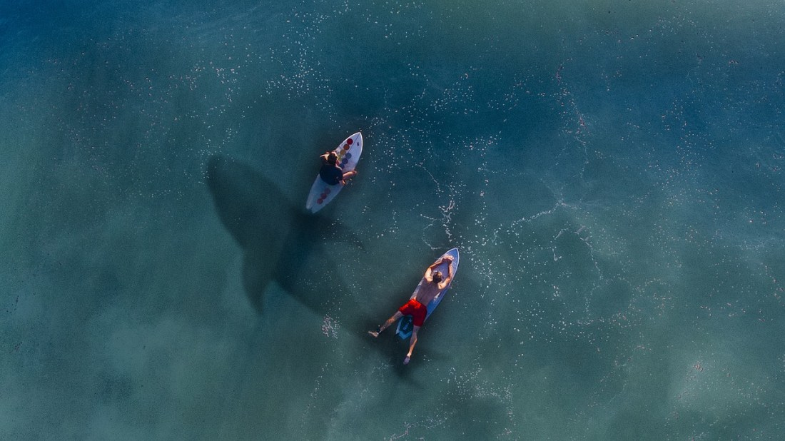 Surfers with shark below