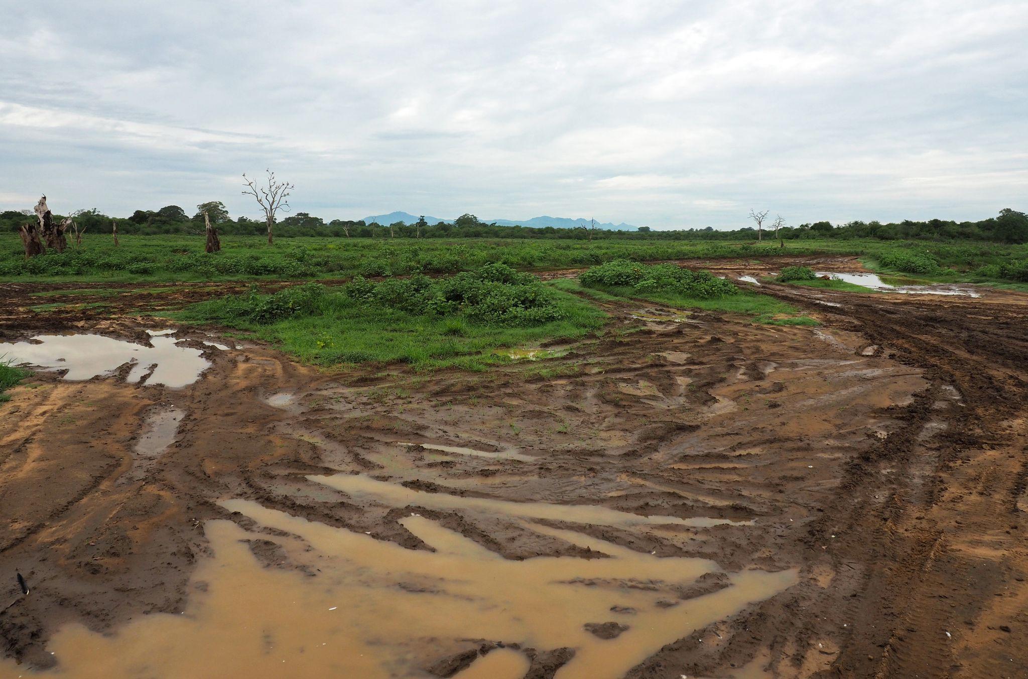 Mud tracks Udawalwe National Park