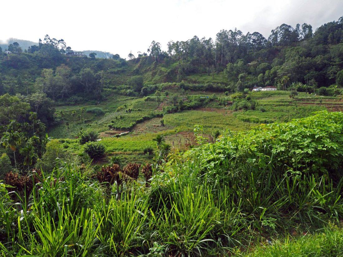 Countryside around Ella