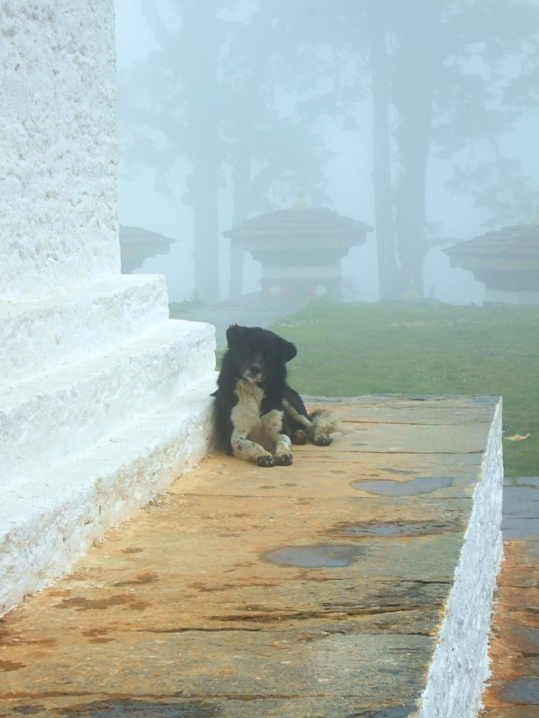 Curious doggie at the Dochula Chorten monument