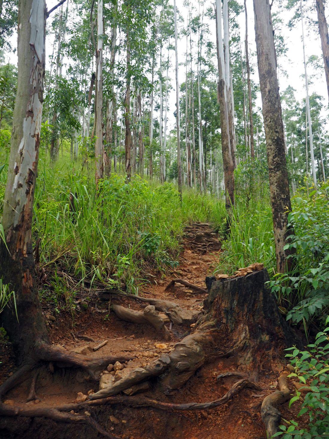 Path to Ella Rock