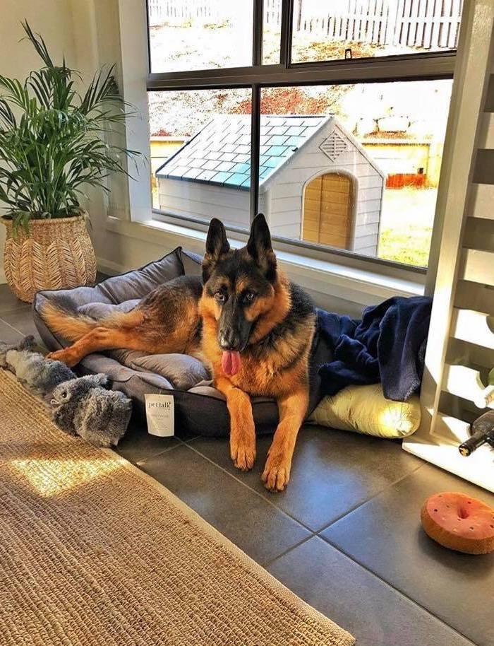 Meet Joe, Our German Shepherd Rescue Dog