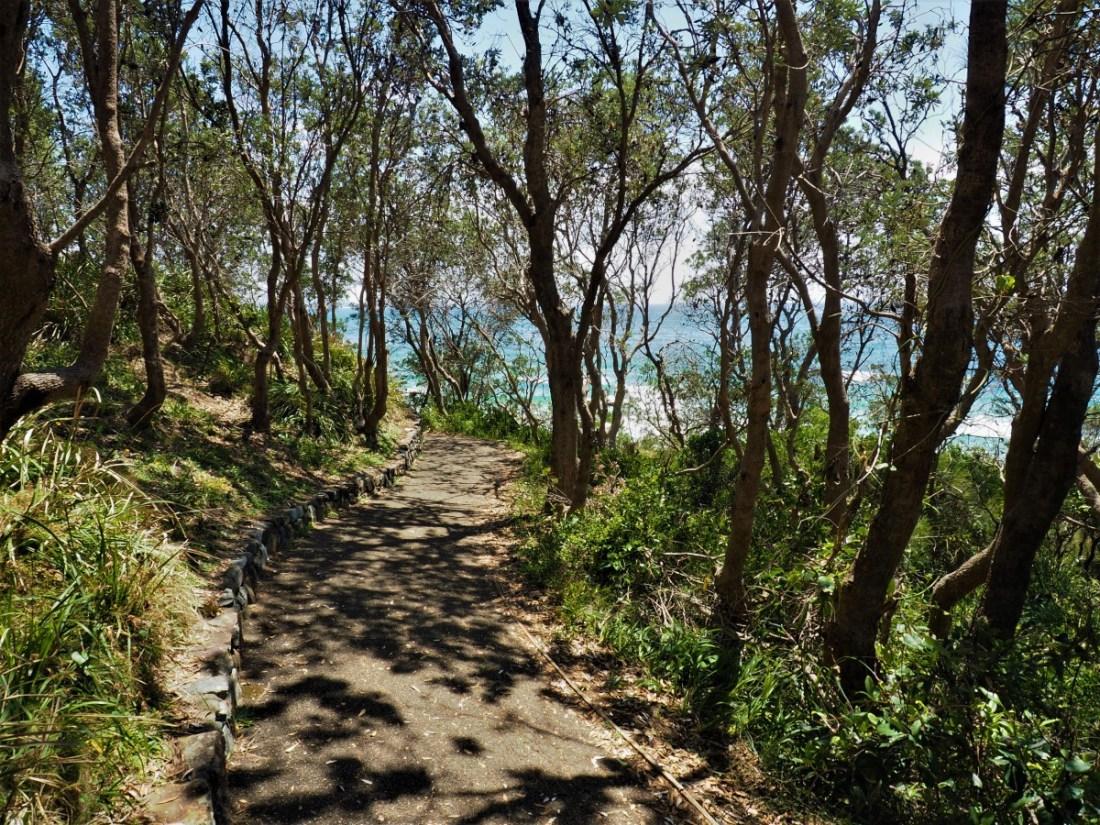Rainforest walk Port Macquarie