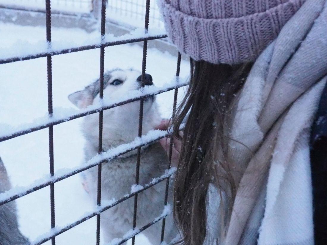 Simone with husky at Santa Claus Village Rovaniemi
