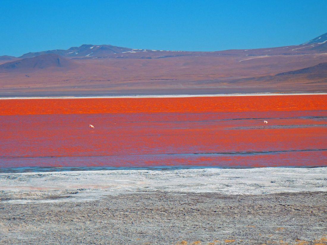 Red Lagoon Bolivia