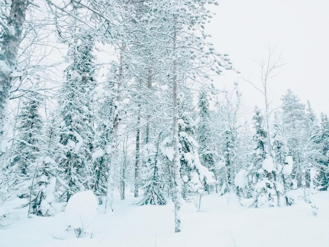 Finnish Lapland