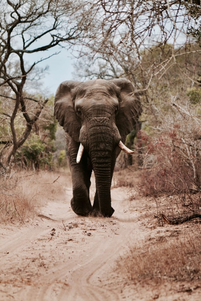 The Big Five: A Bucket List Item