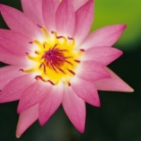 Spiritual and Metaphysical Classes and Workshops - The Austin Alchemist