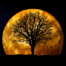 The Austin Alchemist Media Company offers body mind spirit news resources and events - full-moon
