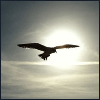 The Austin Alchemist Media Company offers body mind spirit news resources and events - bird soaring