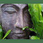 The Austin Alchemist Media Company offers body mind spirit news resources and events - buddha-statue-zen