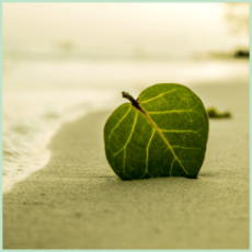 The Austin Alchemist Media Company offers body mind spirit news resources and events - ocean beach leaf