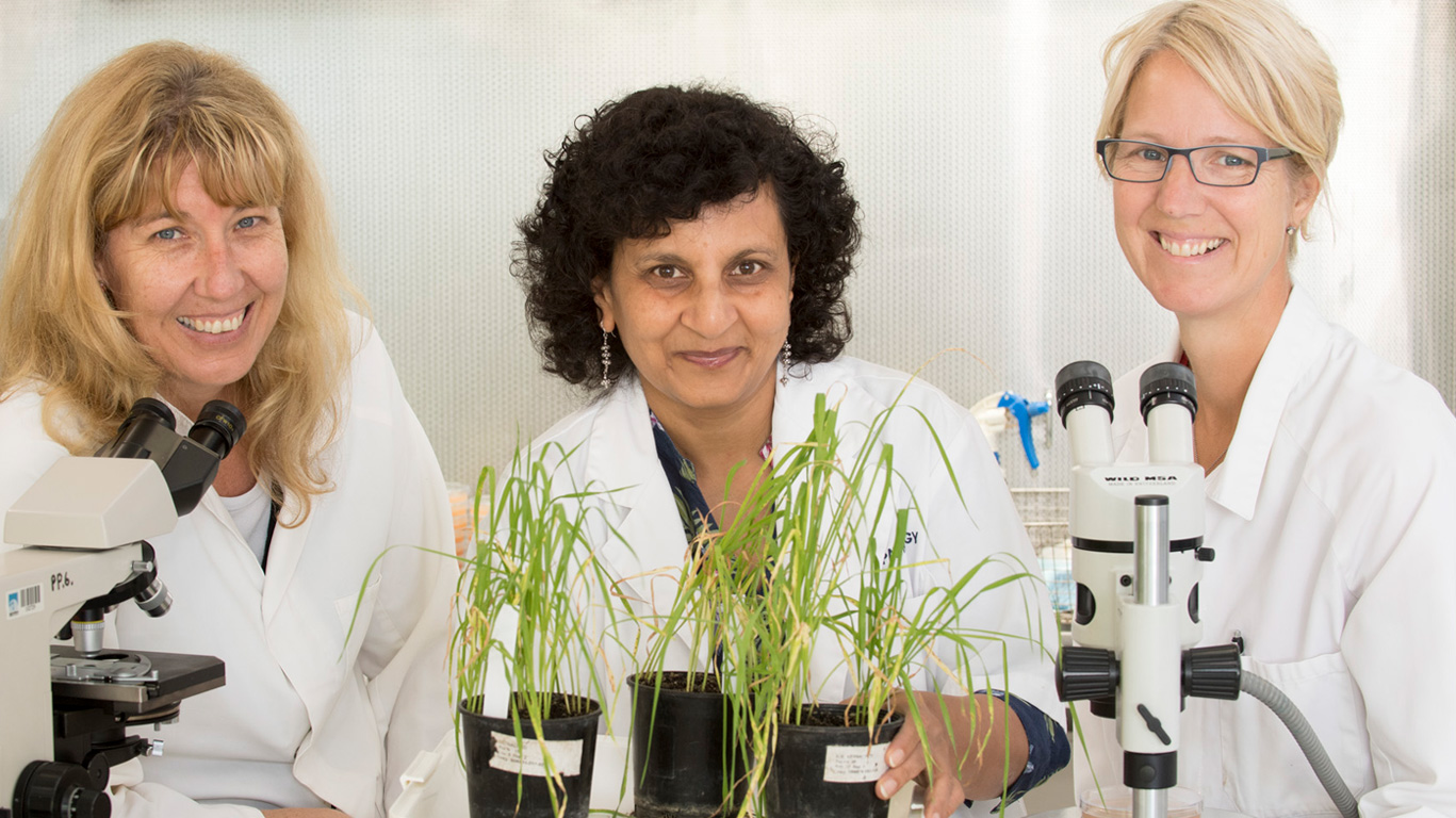 Yellow-Spot-Wheat-Research-Advances---Donna-Foster,-Manisha-Shankar,-Dorthe-Jorgenson_web