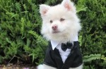 Fancy Dress Inspiration