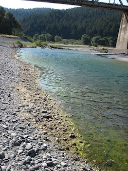 Conditions at a swimming spot at Dyerville just upstream of the railroad bridge are no longer swimmable or advisable for contact by pets, with suspended algae as well as well developed algal scum along the shore.