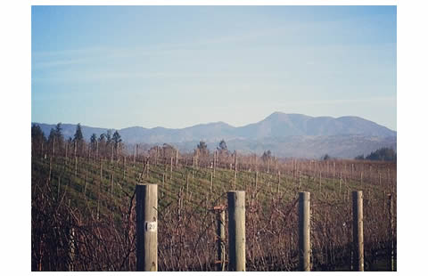 Paul Hobbs Winery. Photo by Jameson Fink via Flickr.