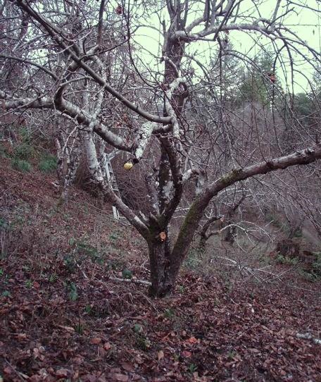 Local-Tree