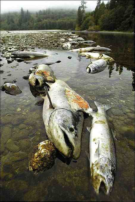 Klamath Fish Kill, 2002
