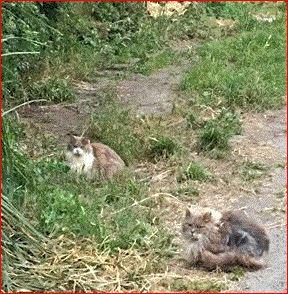 FBcats2