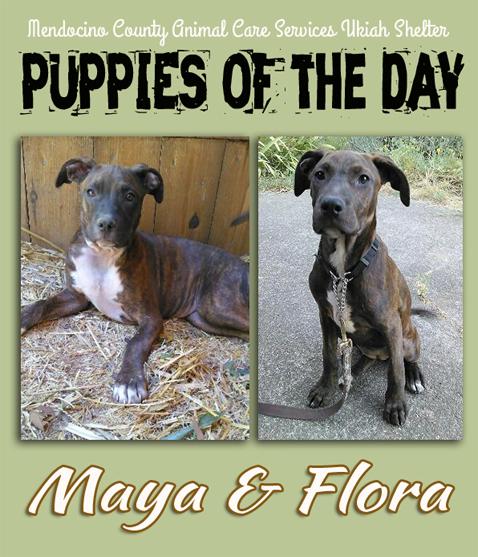 Maya&Flora