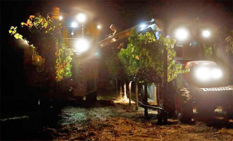 grapeharvesternight
