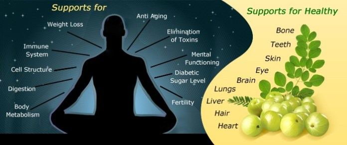 Benefits of Indian gooseberry