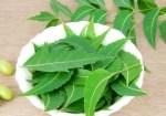 Neem-leaves1-400×280