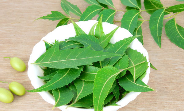 Herbal benefits of Neem leaves