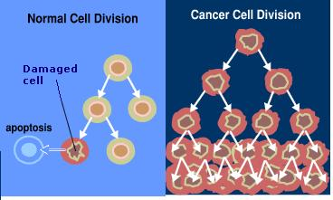 Division of cancer cells
