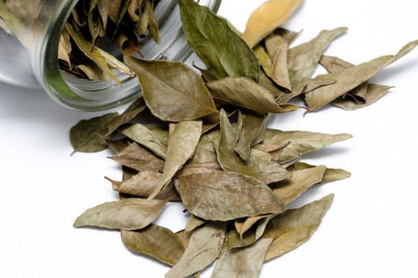 Dried bay leaves in a container