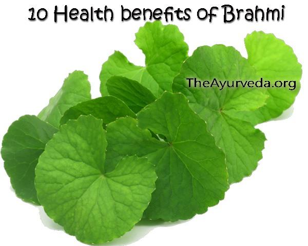 10 health benefits of brahmi