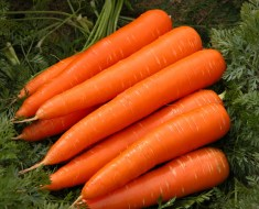 Carrot-fruits