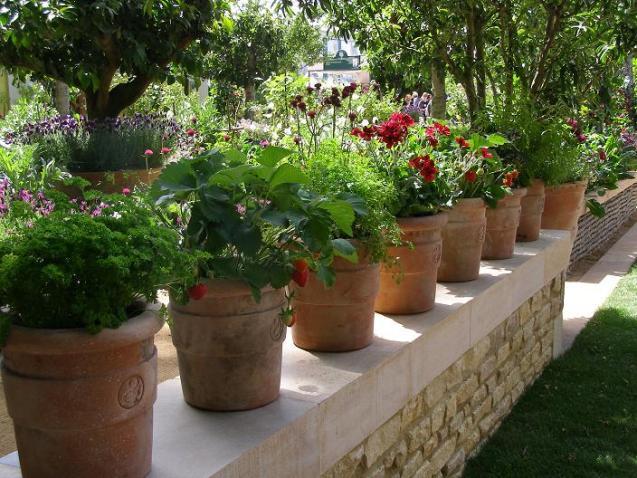 Kitchen garden with pots