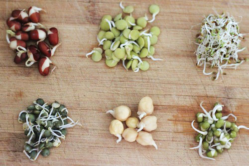Sprouts for a healthy life