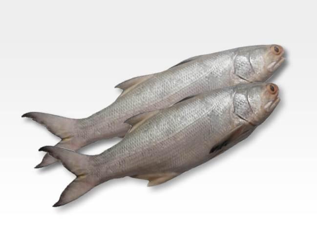 Health benefits of eating Salmon
