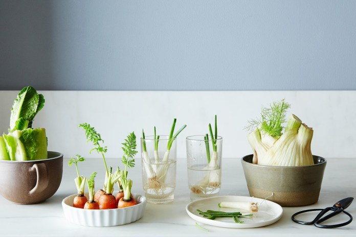 Regrow vegetables again and again
