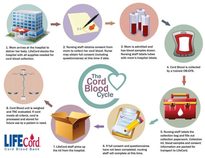 cord blood bank cycle