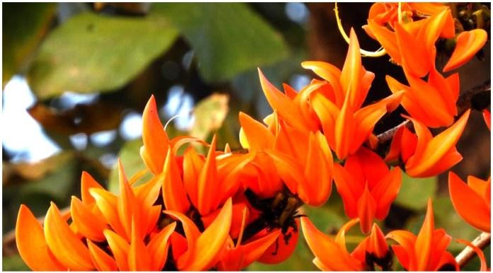 Flowers of Tesu